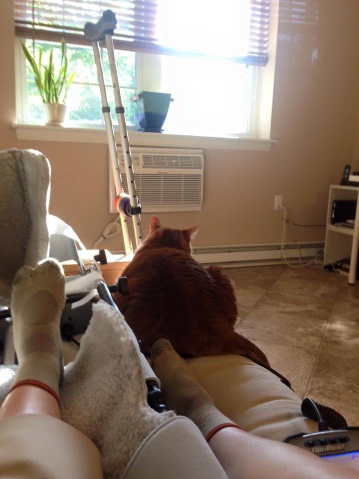 A knee, a CPM machine, a cat and a crutch